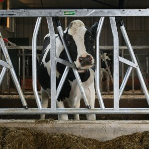 3o6b8172-safety-feed-front-spinder-dairy-housing-systems