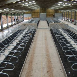 bargh006-freestall-divider-cosmos-spinder-dairy-housing-systems