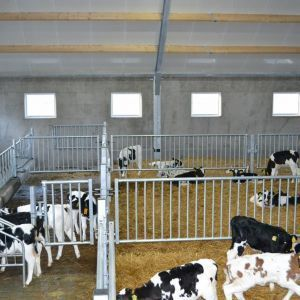 dsc-0013-partition-barrier-spinder-dairy-housing-systems