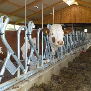 dsc-0185-swedish-safety-feed-front-model-rubos-spinder-dairy-housing-systems