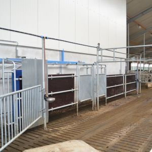 dsc-1339-draw-gate-with-contra-weights-spinder-dairy-housing-systems