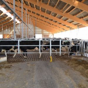 dsc-9159-telescopic-partition-barrier-spinder-dairy-housing-systems