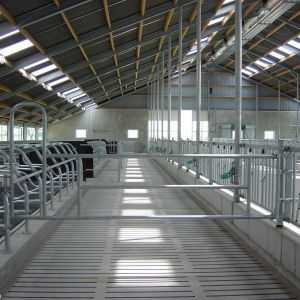 dsc00305-removable-partition-barrier-between-feed-front-and-freestall-divider-spinder-dairy-housing-systems