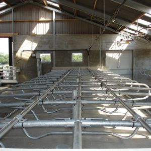 dsc00885-freestall-divider-comfort-young-stock-spinder-dairy-housing-systems