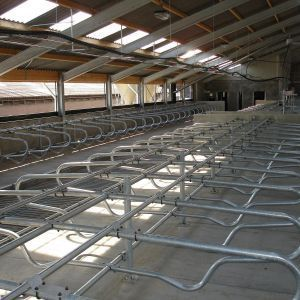 dsc00893-freestall-divider-comfort-young-stock-spinder-dairy-housing-systems