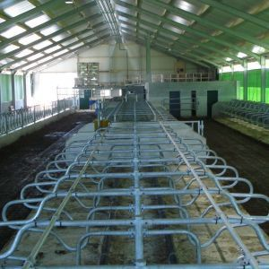 dsc08192-freestall-divider-frisia-perfekt-to-support-post-spinder-dairy-housing-systems