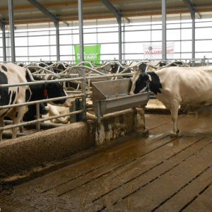 dscn0714-spinder-stainless-steel-water-trough-spinder-dairy-housing-systems