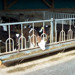 hpim2583-tombstone-feed-front-spinder-dairy-housing-systems