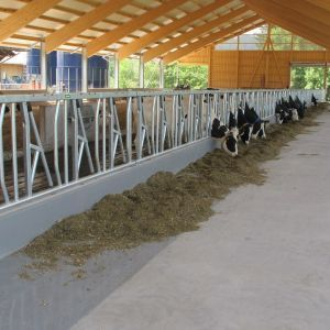 img-2079-safety-feed-front-spinder-dairy-housing-systems