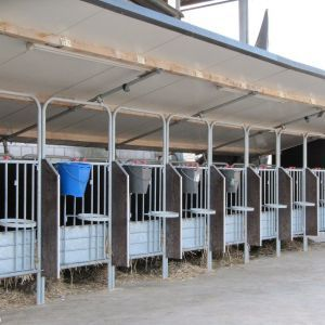 img-4025-individual-pens-for-calves-spinder-dairy-housing-systems