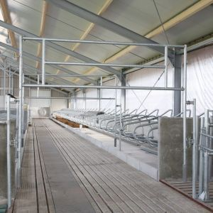 nq7a8626-tilting-gate-spinder-dairy-housing-systems