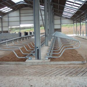 p1010178-freestall-divider-cosmos-spinder-dairy-housing-systems