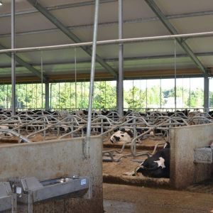 spinder000724-barrier-gate-spinder-dairy-housing-systems