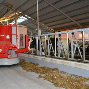 spinder002772-safety-feed-front-heifers-and-jerseys-spinder-dairy-housing-systems