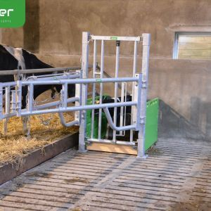 cuddle-box- calf standing in cuddle box -spinder-dairy-housing-concepts-spinder006066